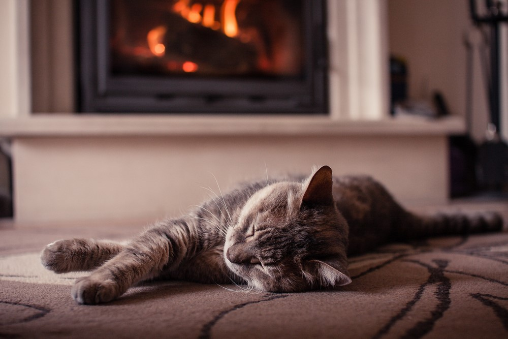 A sleeping cat enjoying some creature comforts in front of the fire