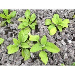 Biodegradable Garden Mulching