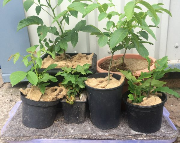 A collection of plants in pots, with jute mulch mats covering the soil and wool felt capillary matting underneath