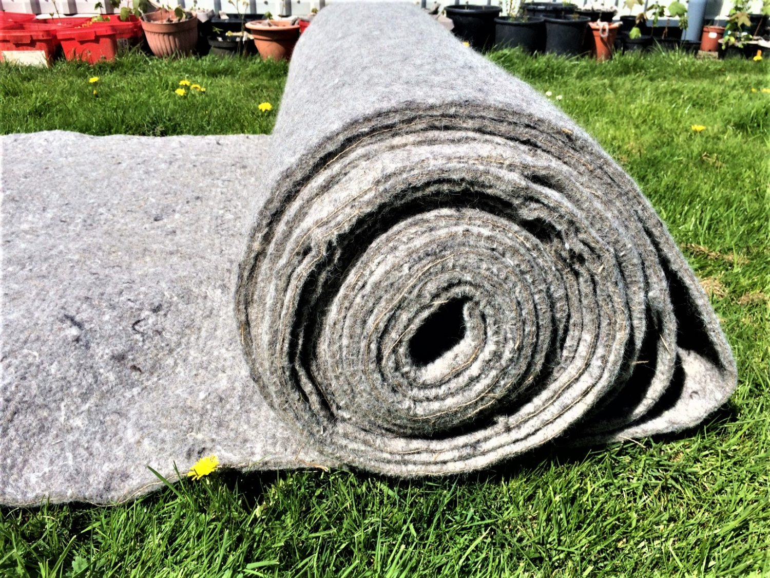 A large roll of wool garden mulch felt with the image focusing on the side view of the roll. About a metre of felt is unrolled onto bright sunlit grass