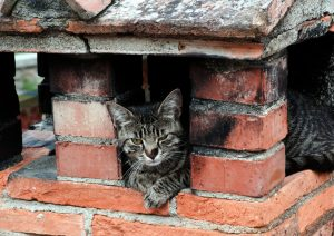 A grey tabby cat stuck in a covered chimney!