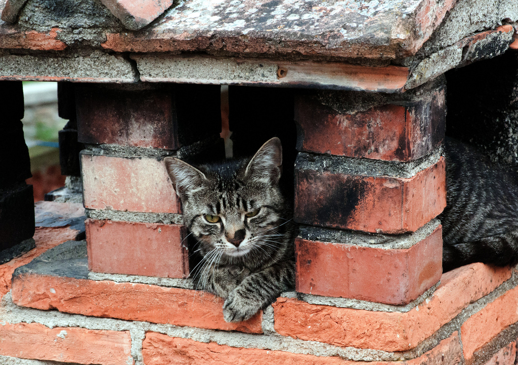 A cat stuck in a chimney!