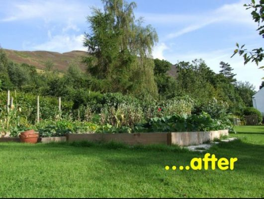 A lush and abundant vegetable bed with timber raised bed surrounds is the consequence of using felt to mulch down the grass
