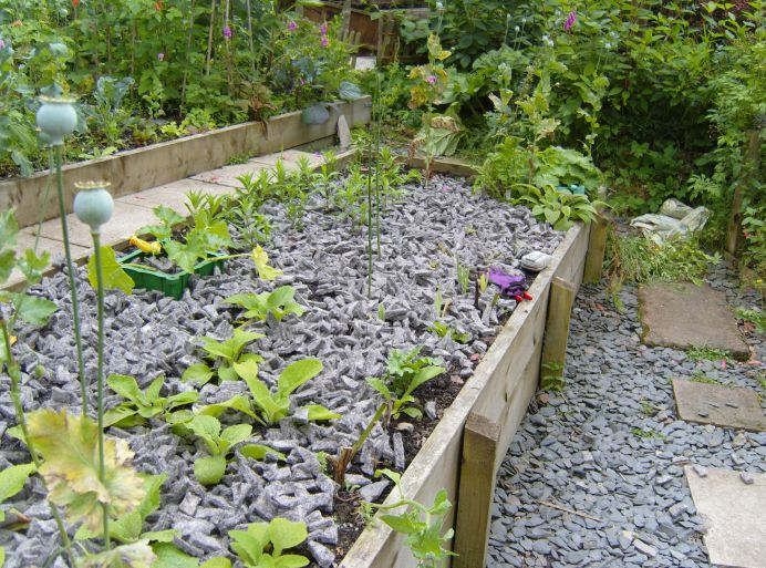 Felt shillies in the raised bed act as mulch for young plants, while below on the ground there are similar looking slate shillies