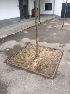 A large square gap in the tarmac where a tree has been planted is covered with a complete layer of sheep wool felt in order to protect the base of the tree.