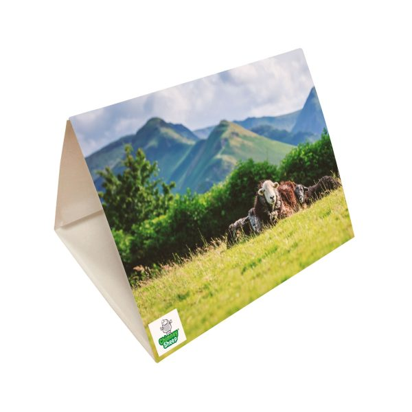 pheromone clothes moth trap for common clothes moths and pale backed clothes moths with image of sheep and catbells mountain in the background