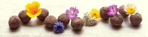 wildflower seed balls in a line