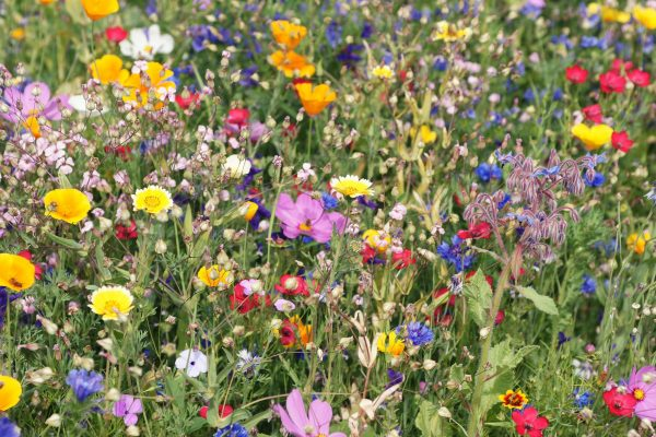 gorgeous mix of native wildflowers