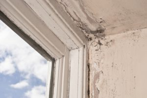 black mould indication of damp in the home