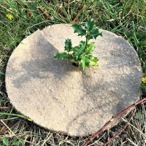 40cm jute mulch mat protects baby holly tree