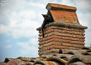 Cat on top of Chimney - for Chimney Sheeps mention in country magazine