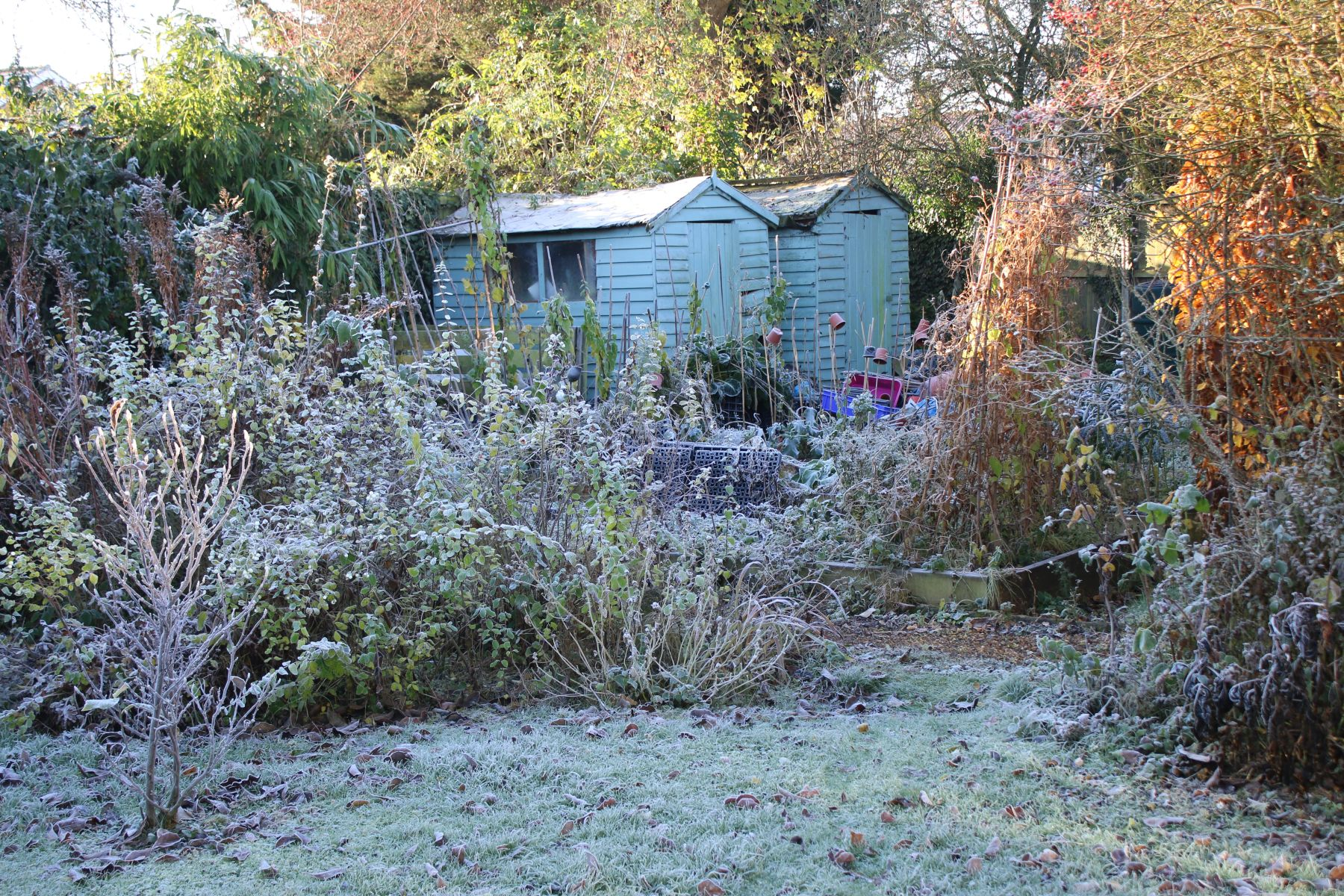 raised veg beds and two sheds painted light green all with dusting of frost for winter garden