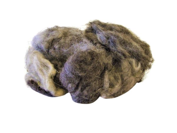Natural Sheeps Wool on white background mixed wool