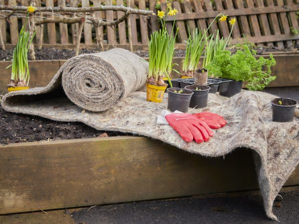 garden sheep wool felt partially unrolled and draped over a raised bed with gardening accessories