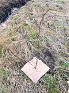 40cm square mulch mat around an elm sapling in field