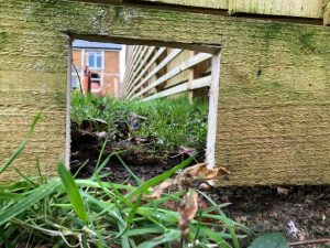 gap at bottom of fence lets hedgehogs through to neighbourhood