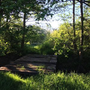 sunlit bridge over stream with bright green leaves on spring trees