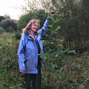 Chimney Sheep owner Sally raises arm to top of alder tree that has grown 4 feet in a year