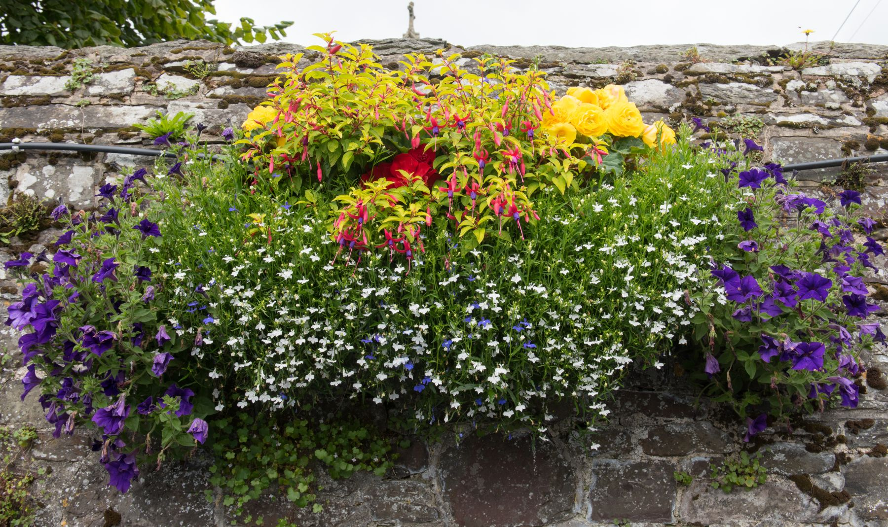 hanging basket full of flowers hanging against a stone wall