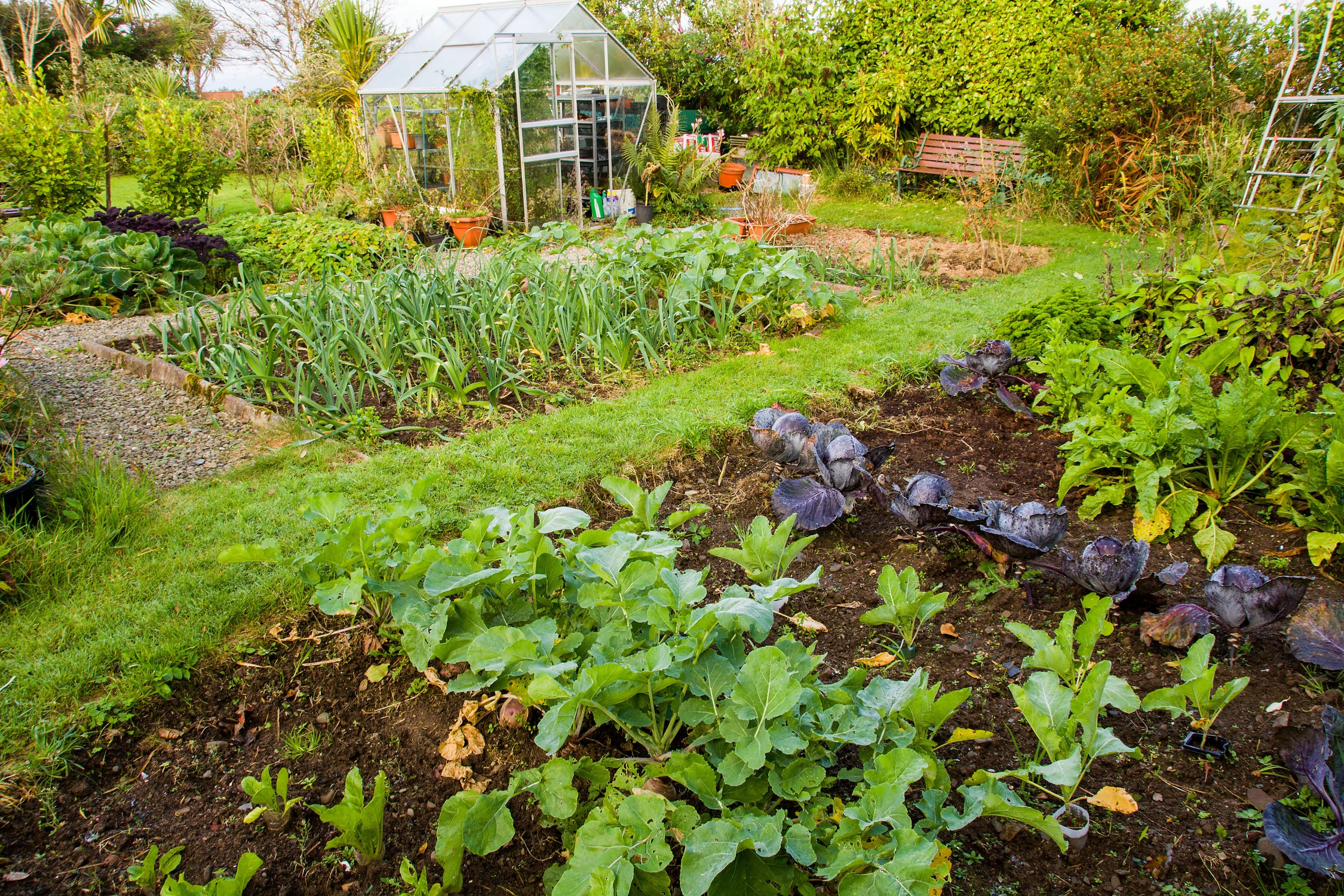National Allotment Day!