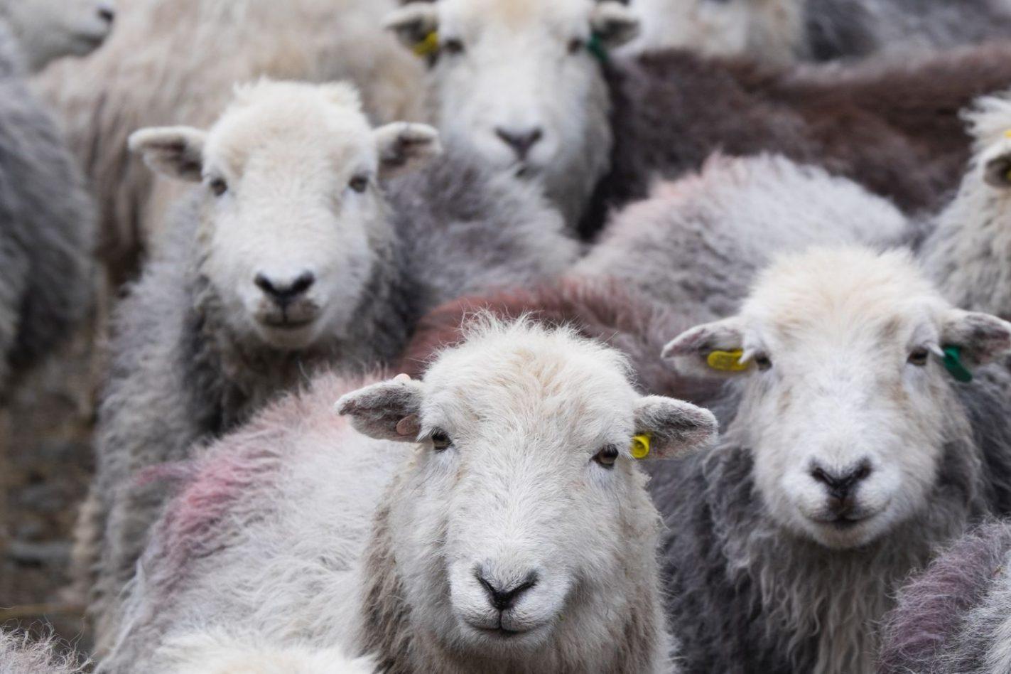 Wool Week!