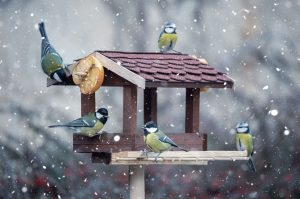Birds feeding at a bird table in winter