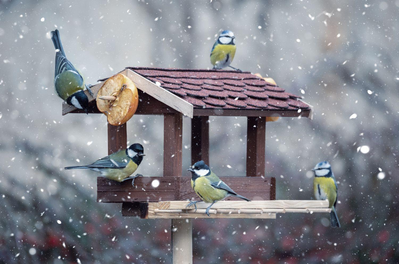 Birds feeding at a bird table in winter