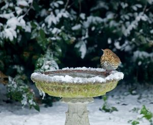 Helping birds in the winter with a bird bath