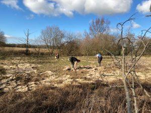 Volunteers mulching!