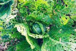 get rid of slugs in your garden