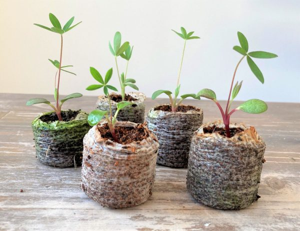 peat free compost seed coins
